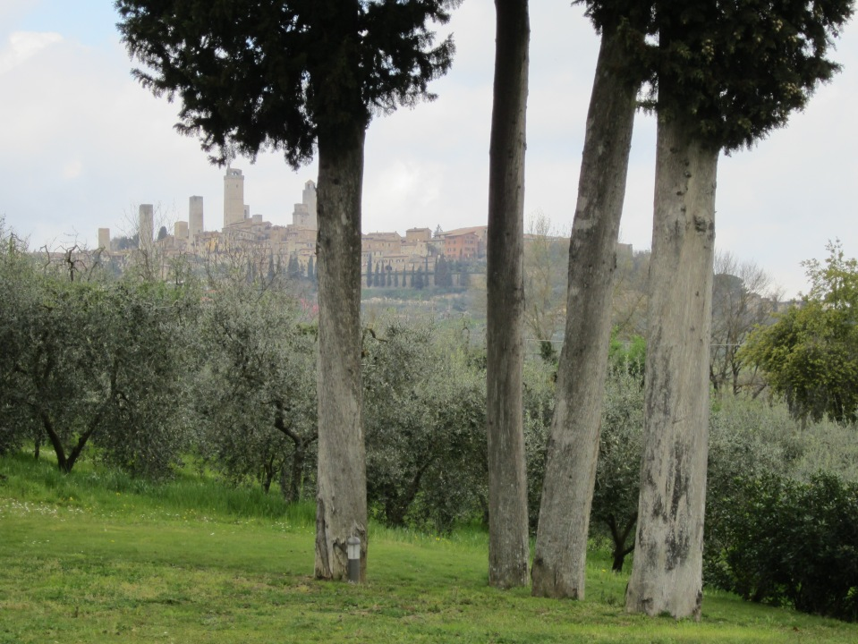 Approaching the olive grove